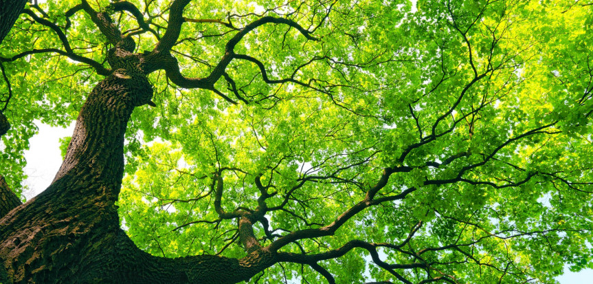 Green-Tree-Underneath-correct-863x413